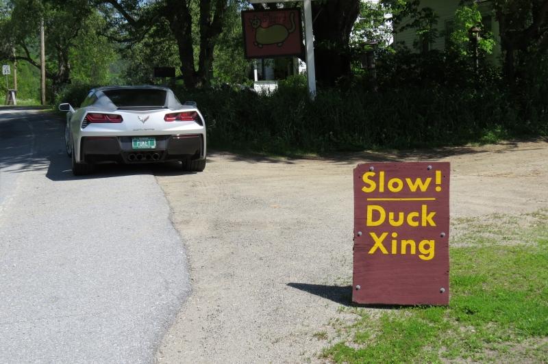 Hancock-Duck-Crossing